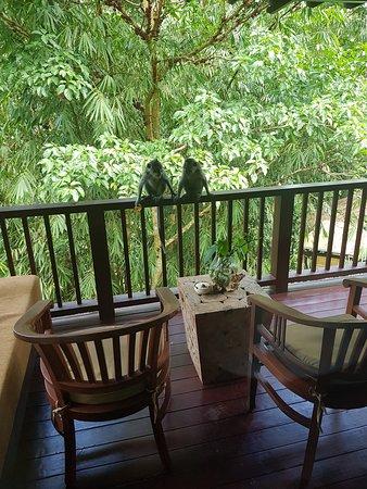 Nandini Bali Jungle Resort & Spa : Nandini  jungel resort bali