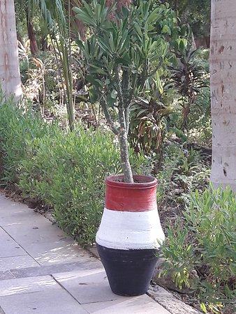 Végétation..