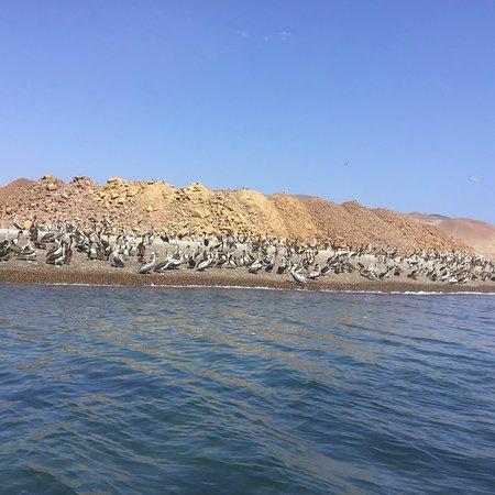 Excursions in Peru