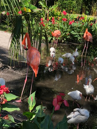 Beautiful flamingos surrounded by beautiful flowers picture of everglades wonder gardens beautiful flamingos surrounded by beautiful flowers mightylinksfo