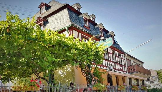 Assmannshausen, Tyskland: Blick vom Rheinufer