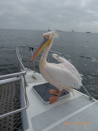 Catamaran Charters: Pelican on board!