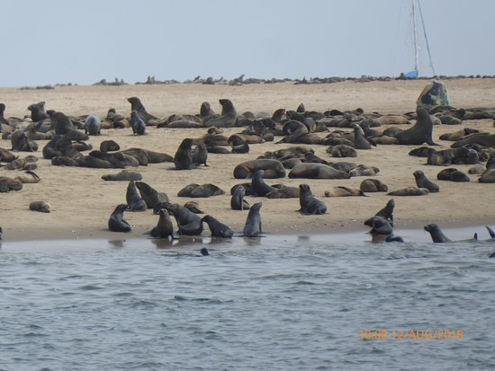 Catamaran Charters: Cape Fur Seal Colony