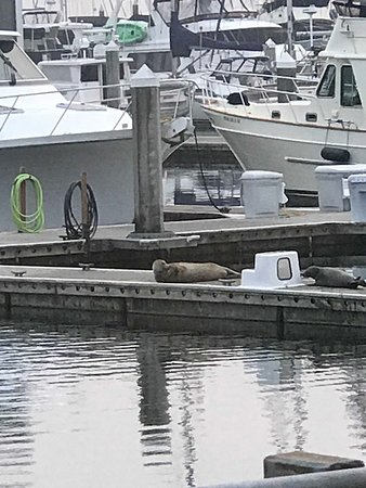 View from our window at Nicki's Bella Marina - two seals!