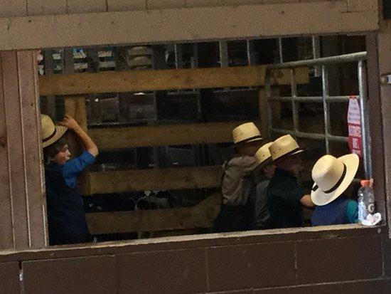 Amish Heartland Tours: Amish boys at the Livestock Auction Barn