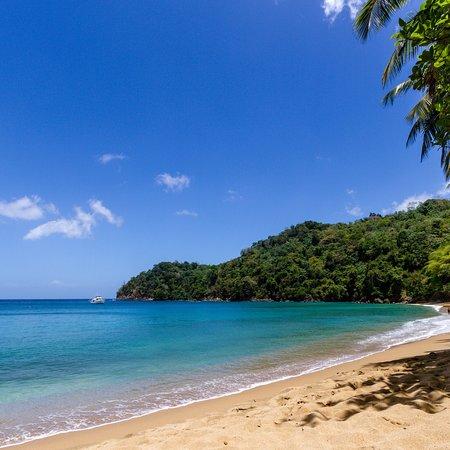 Englishman's Bay: photo1.jpg