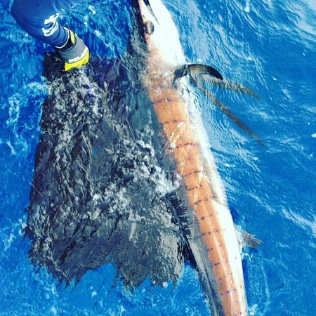 Cap Estate, St. Lucia: 100+ lb sailfish caught on Exodus Charters Deep Sea Fishing Excursion