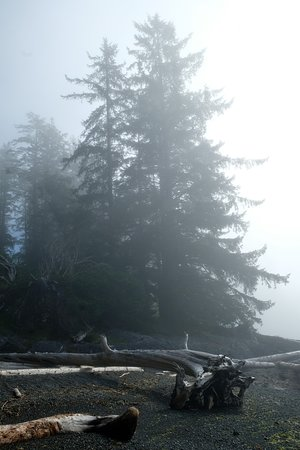 Moresby Island, Canada: Misty morning on secluded beach