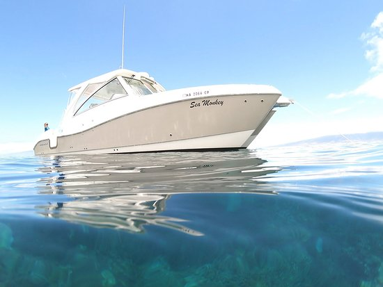 Sea Monkey Private Charters