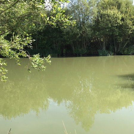 Marden, UK: One pond on a sunny day, average size of carp from the trainer/fun pond :)