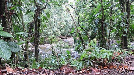 Парк Национальный, Гваделупа: le sentier qui méne a la cascade