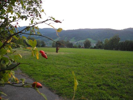 Zell am Moos, Österrike: Eine riesige Wiese bis zum See