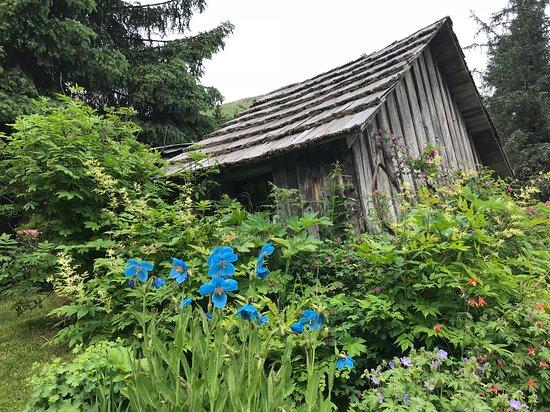 Crow Creek Mine: Flowers everywhere