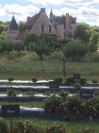 Lassay-sur-Croisne, Frankrike: chateau et fraisiers
