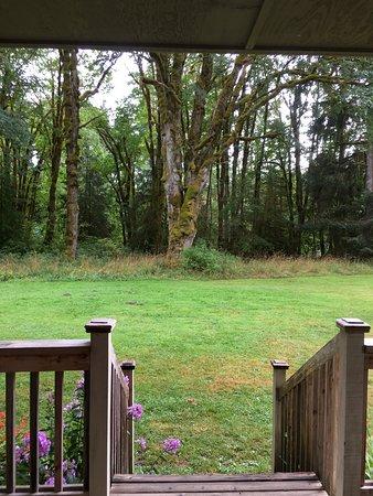 Sappho, Etat de Washington : Quiet location - river just past the trees