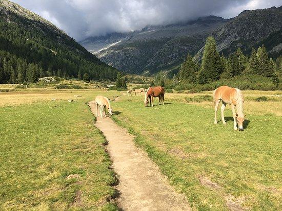 Valdaone, Италия: Particolare lungo il sentiero per il rifugio