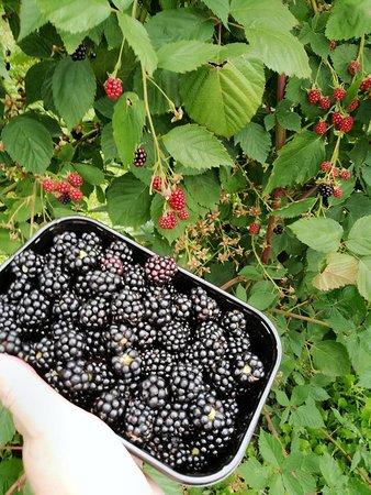 Vink Fruitboerderij