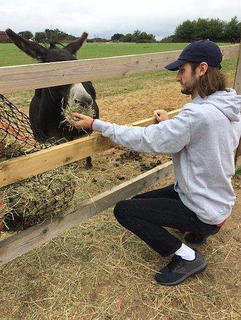 Frettenham, UK: Hundreds of donkeys, horses and foals to see