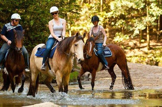tamraght 2 Equitazione