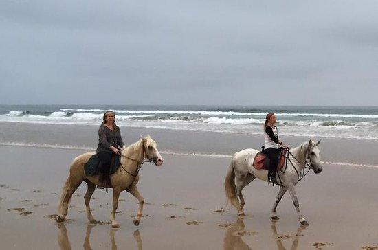 tamraght 1 hours Sunset Horse Ride