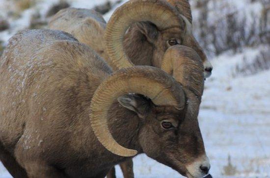 Grand Teton Full Day Winter Tour for...