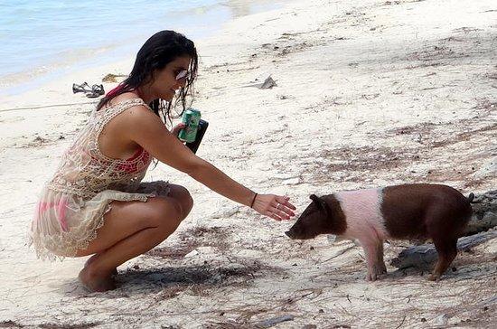 Spanish Wells Pigs Excursion