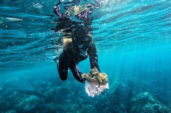 Snorkeling da costa (excursão...