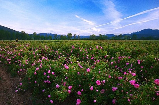 Sofia, Plovdiv e The Rose Valley em 2...