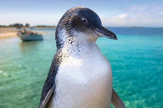 Full-Day Penguin Island y Fremantle...