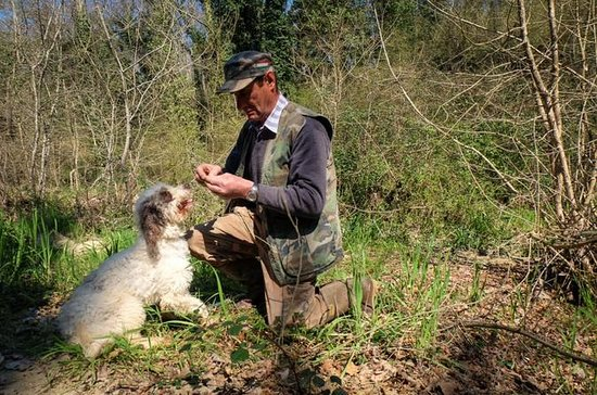 Truffle Hunting with Wine and Olive...