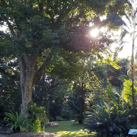 Edge Hill, Australia: Flecker Botanical gardens