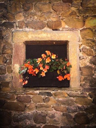 Waddington, UK: Beer Garden Flowers