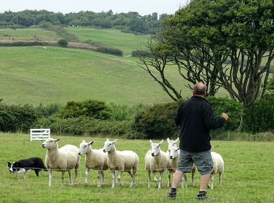 Borough Farm Sheepdog and Falconry Displays: Farmer, small herd trial and beautiful farm view