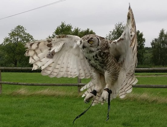 Sky Birds Of Prey