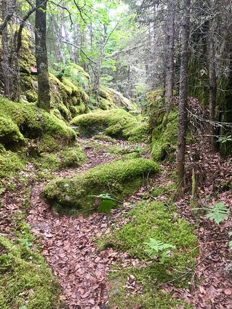 Thunder Bay District, Canada: trail through the forest