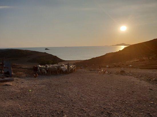 Limnos, กรีซ: 20180805_194550_large.jpg