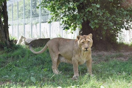 Tregomeur, France : LIONNE