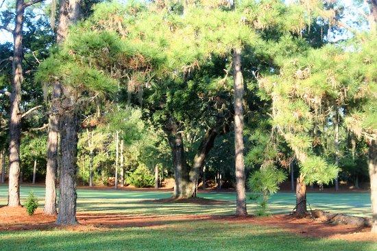 Ocala National Golf Club: Plenty of room to cut 'er loose