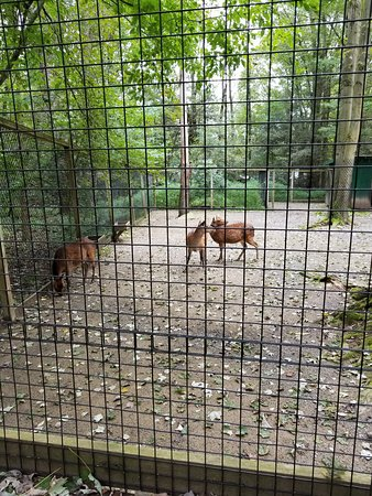 Claws 'N' Paws: Animals at the zoo