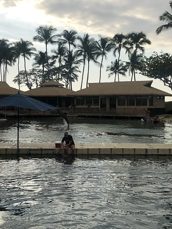 Hilton Waikoloa Village: 라군내 돌고래