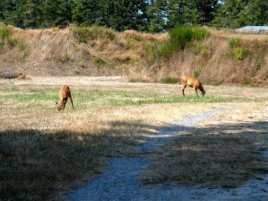 Fort Flagler State Park: Deer