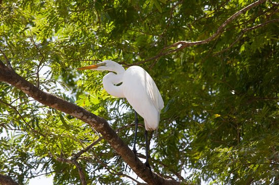 パロ・ベルデ国立公園のコスタリカの野生動物