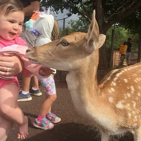 Foto de Grand Canyon Deer Farm