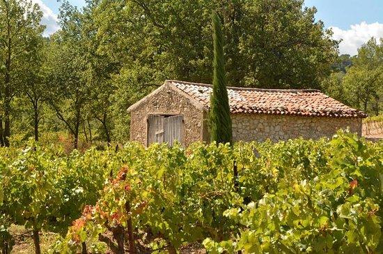 Halvdagers vin- og fototur i Provence