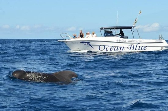 Ocean Blue Tenerife Avistamiento de...