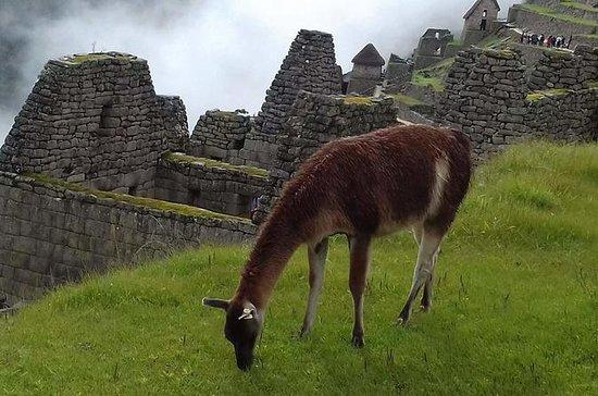 Tour guiado a Machu Picchu desde Aguas...