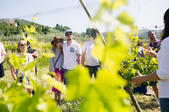 Winery Experience for 3 or more people