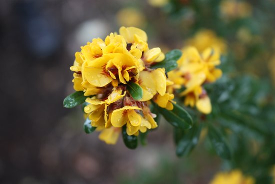 Stokes Bay Bush Garden: Beautiful Collection