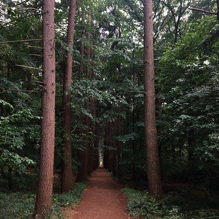 Beernem, بلجيكا: woods