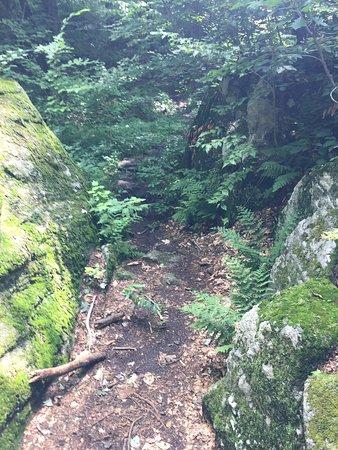 Marlboro, VT: Part of the scenery along the Mount Olga Trail